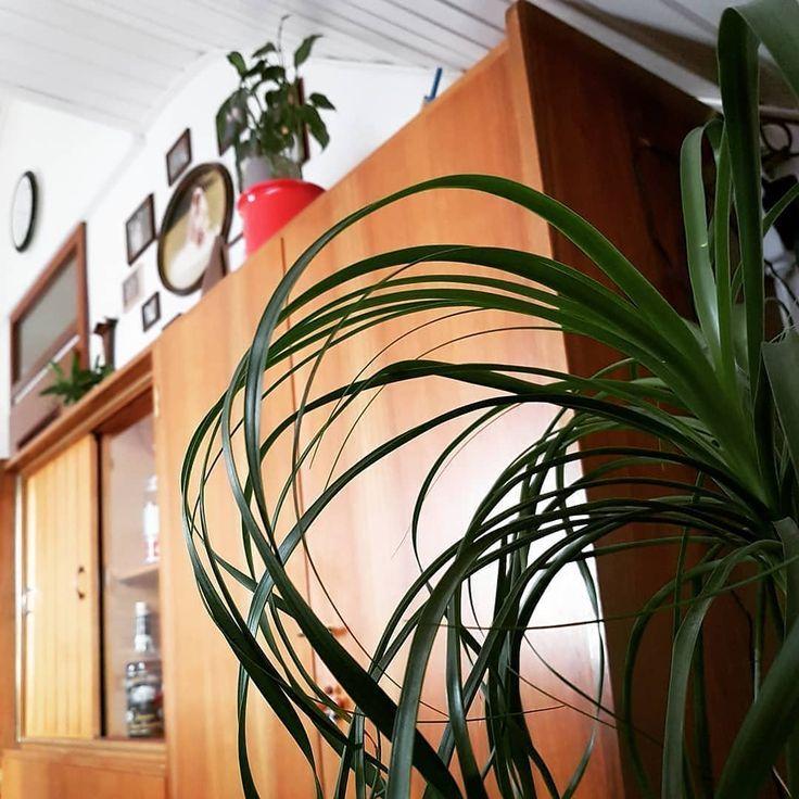 Wohnzimmer Schrank Wohnzimmer Schrank Alterschrank 50er