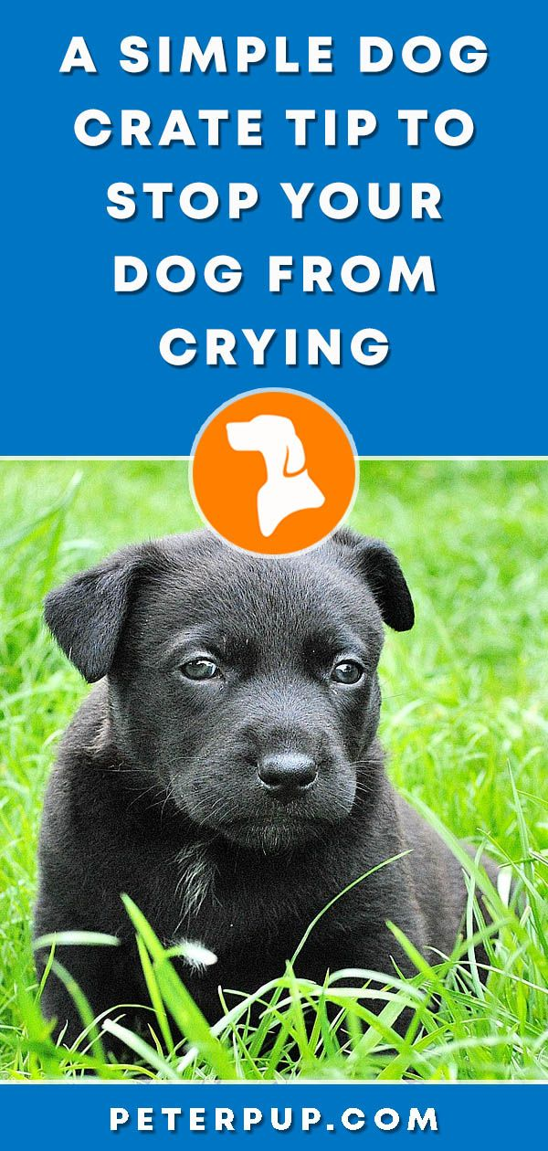 How To Stop Puppy Crying In Crate At Night Dog Training Crate
