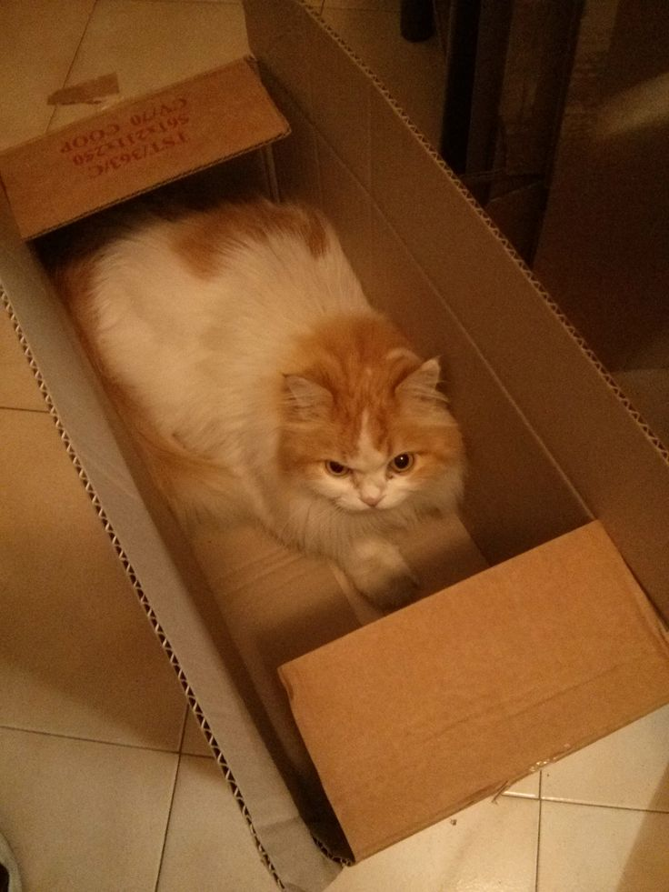 Cat in a box yeeeeeah my cat in a box yeah babe!