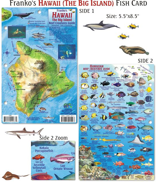 1000 images about hawaii fish cards on pinterest for Big island fishing