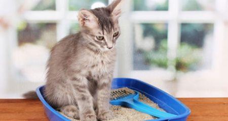 Pet Sitting: 5 συμβουλές για να σταματήσει η γάτα σας την ούρησ...