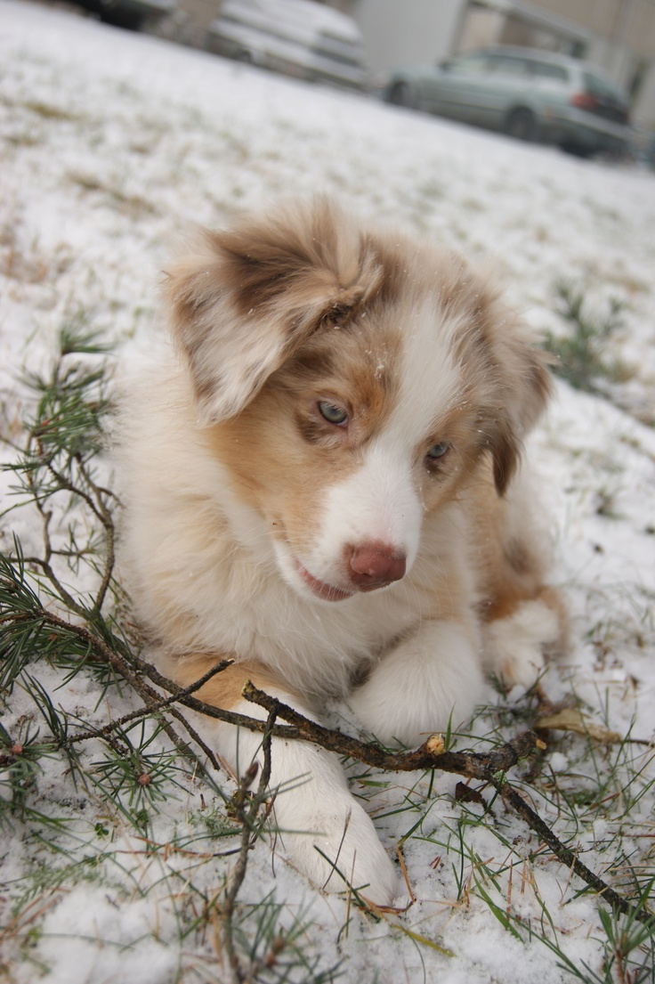 http://swearme.blogspot.fi/   #photography #dog #puppy    I'm so adorable with my twig here.  ©Marika Lindström