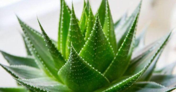 Deze 11 planten verbeteren de slaap en zuiveren de lucht in je slaapkamer