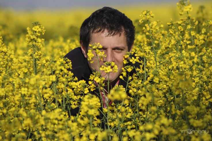Hyde and seek in a canola field