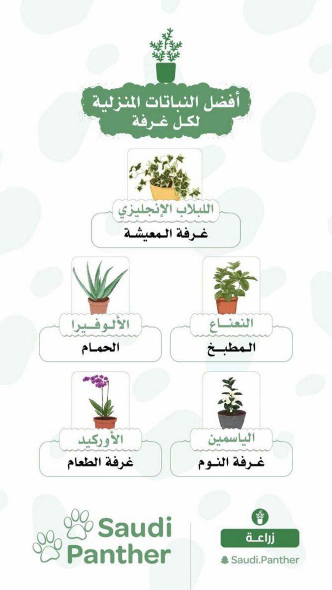 افضل النباتات المنزلية لكل غرفة In 2020 Plant Decor Tiny Garden Ideas Beautiful Terrariums
