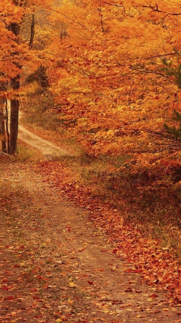 17 best ideas about fall backgrounds iphone on pinterest