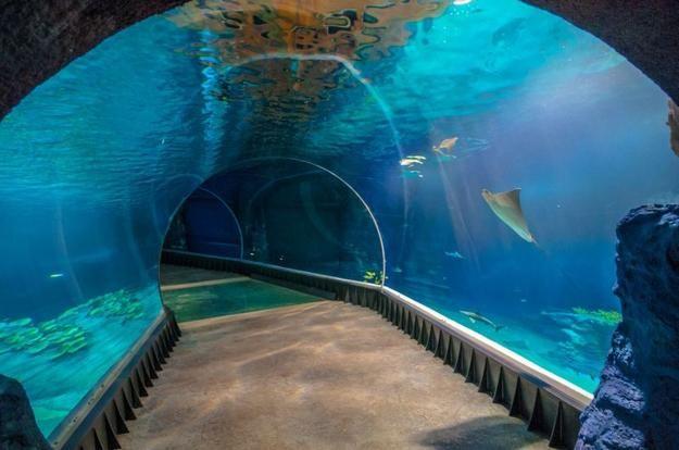 Afrykarium we Wrocławiu tunel