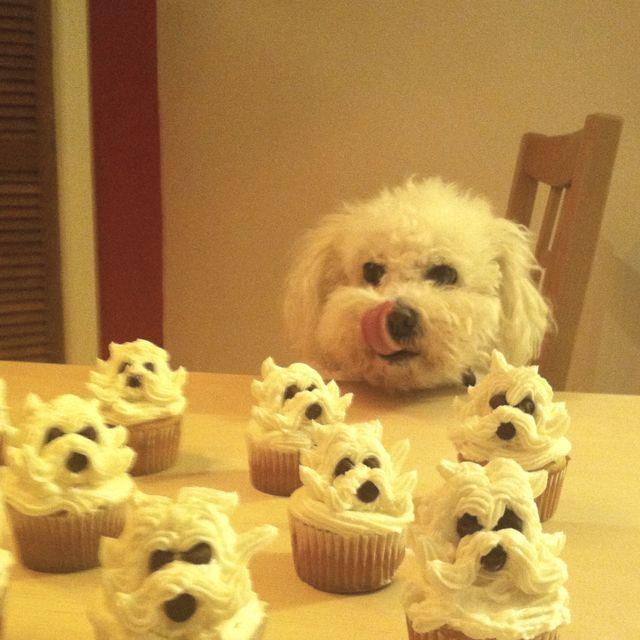 Happy Bichon birthday!! Should make these for Bella's next birthday!