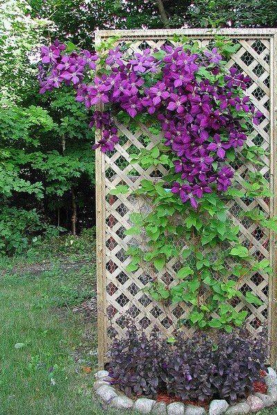 Фото Без названия. Альбом Фото группы - 24292 фото. Фотографии Цветы на стену.