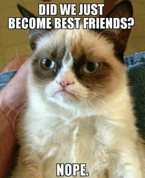Grumpy Cat + Step Brothers :)