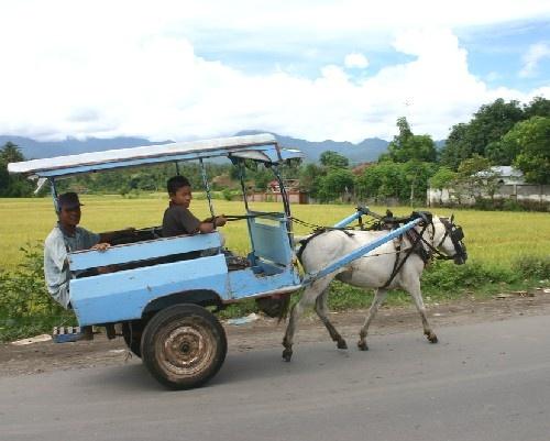 """Lombok, mode de transport populaire sur l'île : """"Lombok Ferrari""""."""