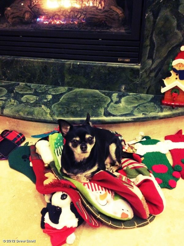 Someone likes to hog all the stockings.