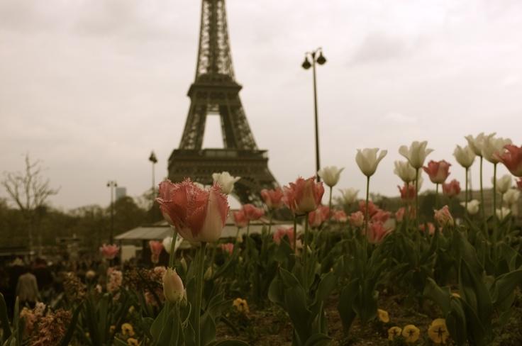 Paris    © Lucy Wood