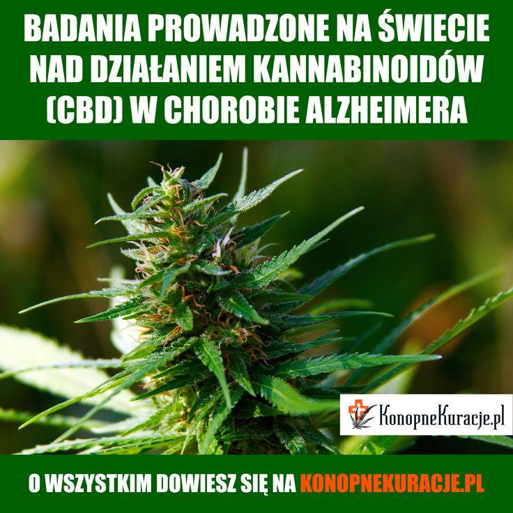 #cbd #olejkicbd #olejekcbd #olejcbd #konopie #konopnekuracje #konsultacje #zdrowie #warszawa #polska #alzheimer #alzheimers