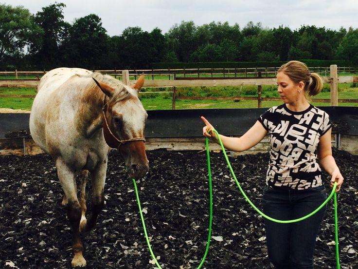 Du hast ein neues Pferd und möchtest schneller mit ihm zu einer Einheit werden?…