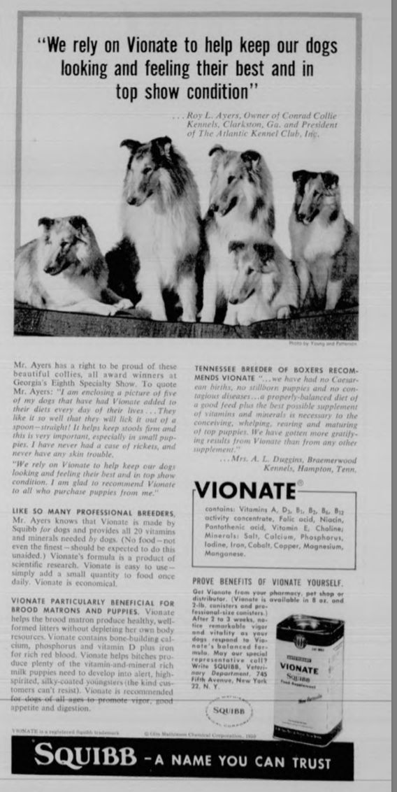 Vintage Squibb Advertisement With Collies About 1957 Collie