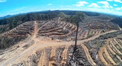 Drone footage shows what rainforest destruction really looks like : TreeHugger