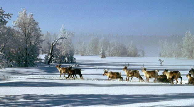 Arjeplog, Lapland, Sweden
