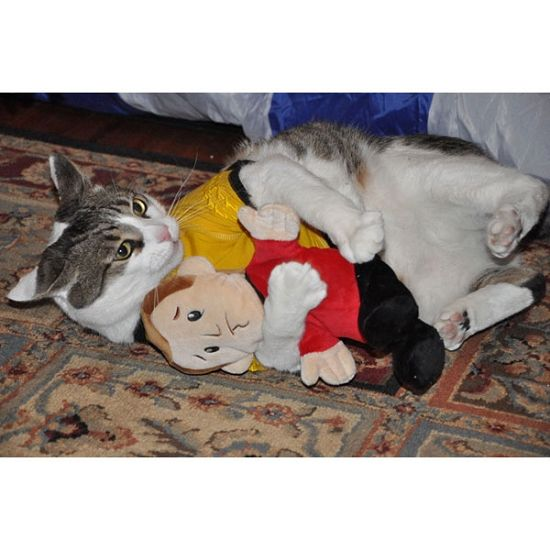 Serendipity Dog Beds