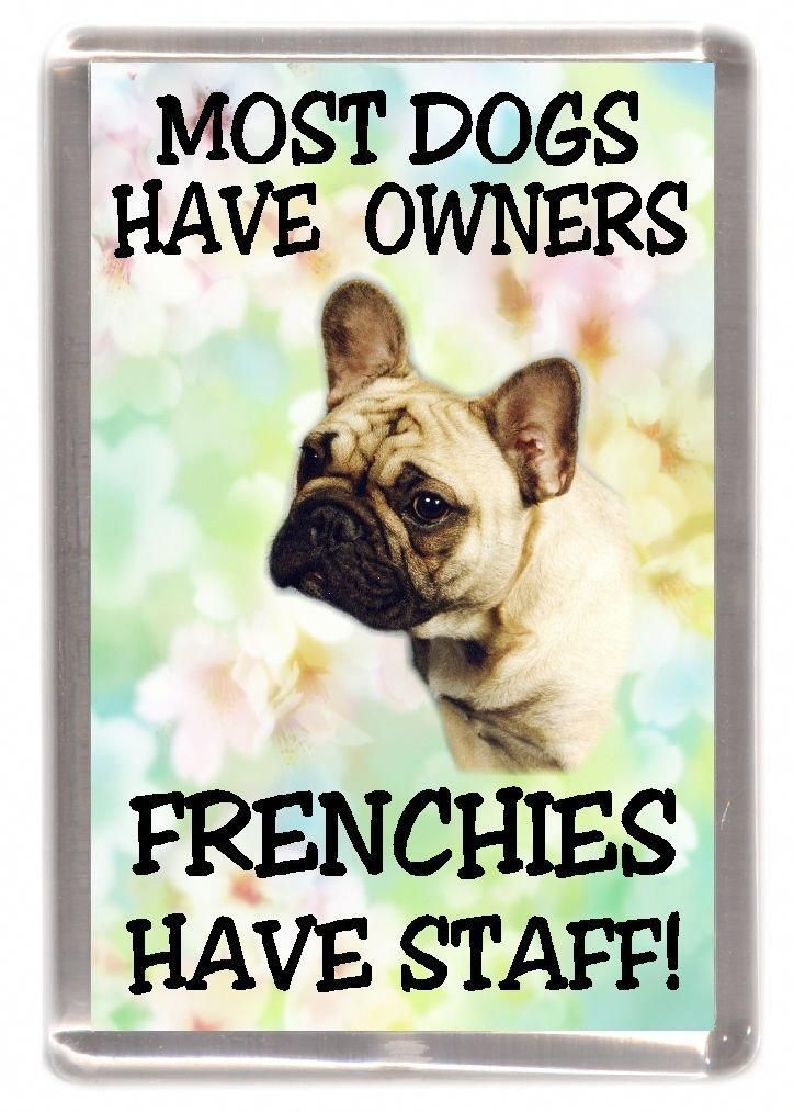 French Bulldog Fridge Magnet Frenchies Have Staff By Starprint