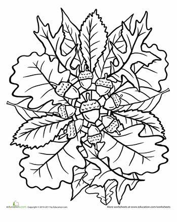 Worksheets: Oak Tree Coloring Page: Mandala