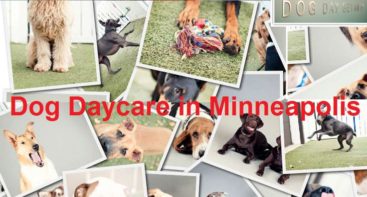 There are numerous individuals that leave their pets at a dog daycare center for the proper care and attention. You must consider boarding your furry child at the #dogboarding facility for a tension free life.  #DogBoardingLakevilleMN #BloomingtonDogBoarding #DogBoardingEaganMN #DogBoardingBurnsvilleMN #DogTrainingStPaulMN #DogBoardingBloomington #BloomingtonDogBoarding   http://dog-boarding-and-care.blogspot.in/2015/04/is-it-necessary-to-leave-your-furry.html