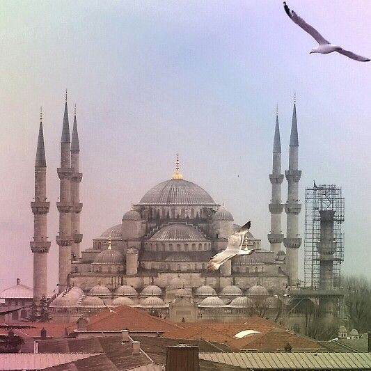 Sultanahmet, or, Blue Mosque, and gulls
