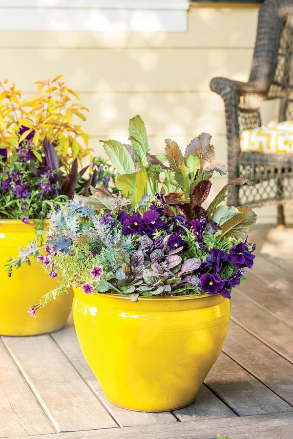 Show Your True Colors - 121 Container Gardening Ideas - Southernliving. The plants in this LSU-themed container all thrive in part sun and moist potting mix.