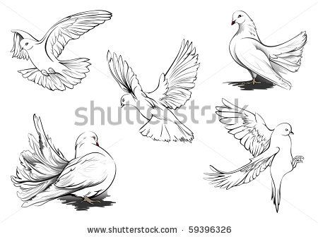 Hand drawn vector sketches of beautiful White doves in different positions. All doves are in separate layers. Two doves are more detailed. b...