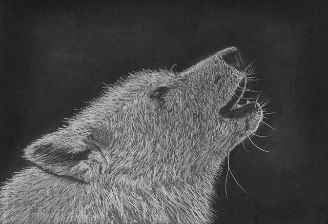 The Howl - Words and Artwork by Tracey Everignton