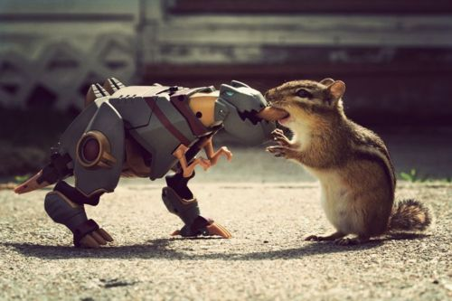 Grimlock vs. a chipmunk... who will win!?Photos, Robots, Squirrels, Animal Photography, Pets Pictures, Art Prints, Photography Tips, Dinosaurs, Food Fight