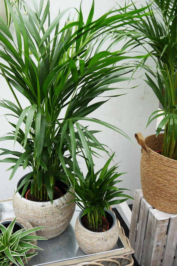 Harmonie Und Wohlbefinden In Deinem Zuhause Greenliving Zimmerpflanzen Pflanzen Grunpflanzen