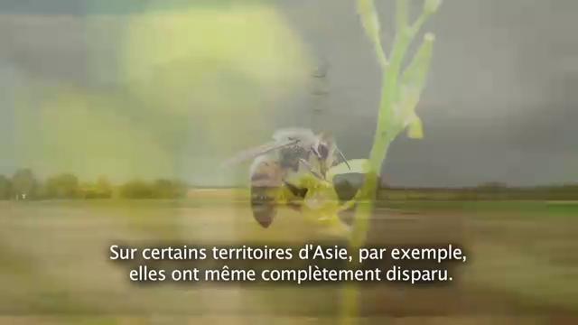 Spot sur le parrainage de ruches de BNP Paribas pour le site Pourunmondequichange.com