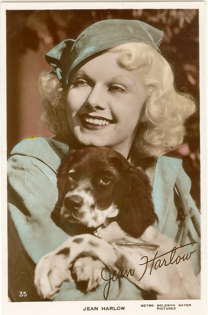 Jean Harlow. Brittany Spaniel dog art portraits, photographs, information and just plain fun. Also see how artist Kline draws his dog art from only words at drawDOGS.com #drawDOGS http://drawdogs.com/product/dog-art/brittany-spaniel-dog-portrait-by-stephen-kline/