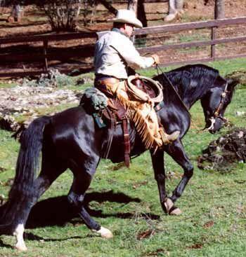 Cowboy Dressage™ at Wolf Creek Ranch