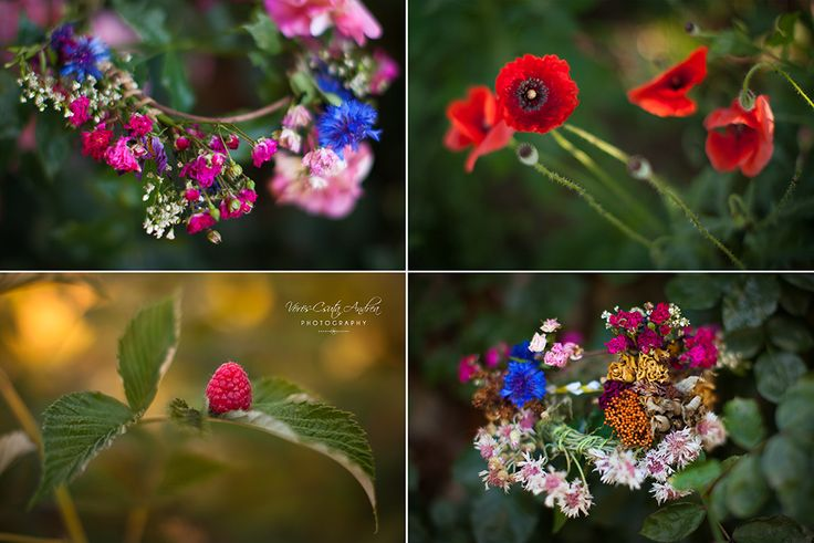 colours of the summer, rose, red poppy, raspberry, flower wreath, csutafoto