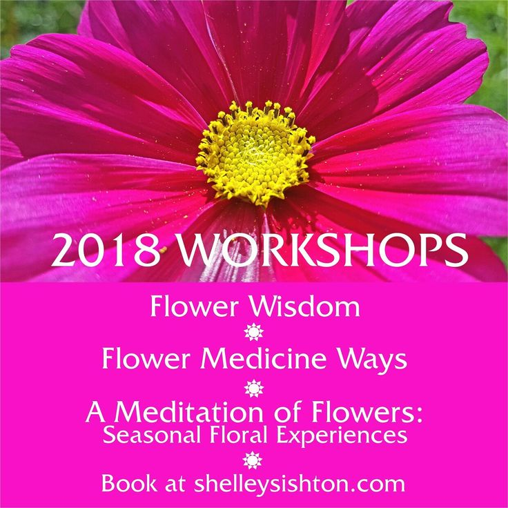 Unique workshops exploring the wisdom of nature and seasonal British flowers to understand the ancient healing power of flowers and how this 'flower medicine' is very relevant for 21st Century life - with many ideas of how you can use this knowledge in your own life and work.