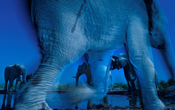 """Essence of Elephants"" (Credit: Greg du Toit/Wildlife Photographer of the Year)"