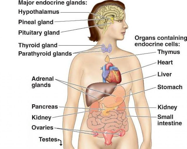 endocrine system diagram (with images) | endocrine system, human ... the endocrine system diagram  pinterest