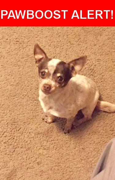 Please spread the word! Pirruris was last seen in Gilroy, CA 95020.    Nearest Address: Near New Ave, Gilroy, CA