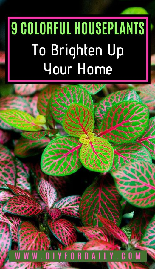 9 Colorful Houseplants to Brighten Up Your Home – Home and Garden