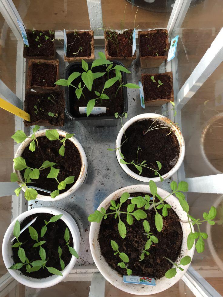De plantjes op de eerste #rokjesdag van het jaar: 10 april 2015.