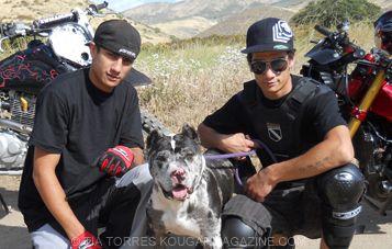 Pitbull and Parolees - Bing Images__LOVE this dog!!