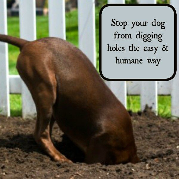 Dogs digging holes in  your yard and garden driving you crazy? There are solutions to this problem that might be way more simple than you have previously considered...