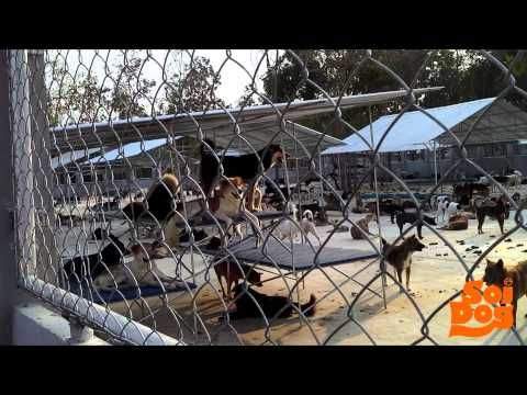 Help us feed dogs rescued from the dog meat trade | Soi Dog Foundation