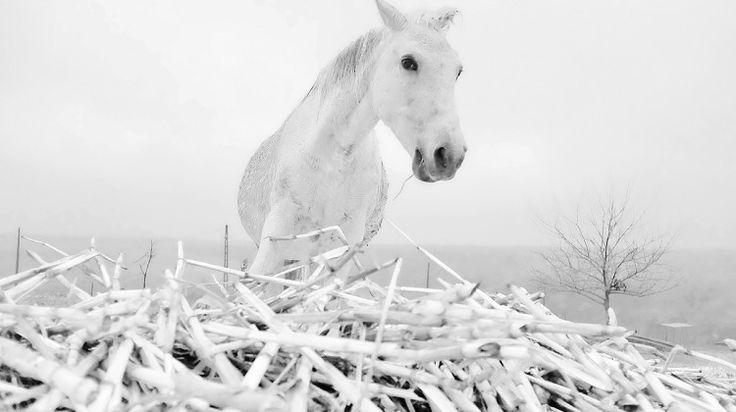 fotografii cai