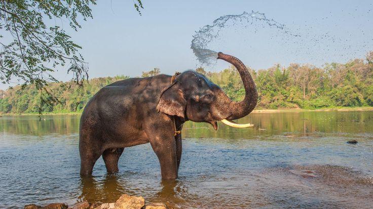 I det enorme land findes der stadig steder, hvor kun de færreste vesterlændinge finder vej. Det nordlige Kerala har det hele – tropisk klima, et smukt højland og masser af kulturelt arvegods fra kolonitiden.