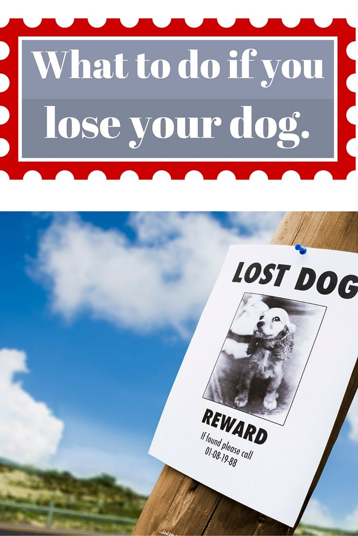 What do you do if you lost your dog? How to prevent a lost dog, create a lost dog poster, and a hunter's trick to finding a lost dog.