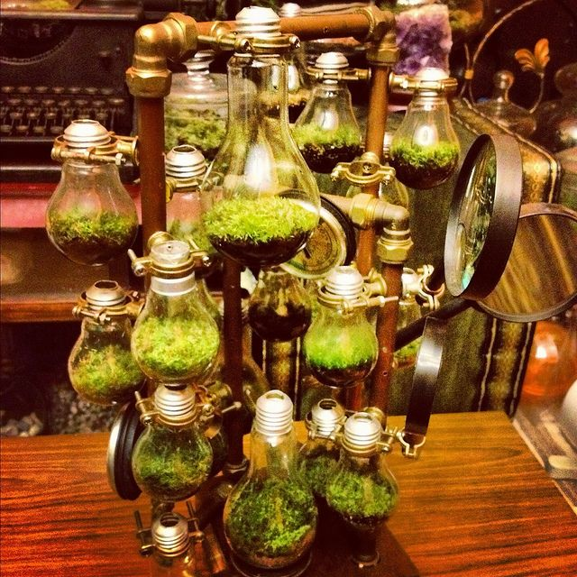 Steampunk Terrarium. I would do this but not as many makes it look to busy (maybe 5). I'd also do different plants in each.