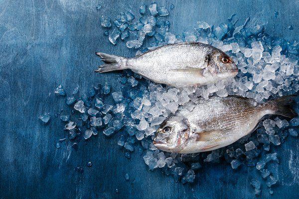 Raw Fresh Fish Dorado On Ice Fresh Fish Photography Fish Food Photography Fresh Fish